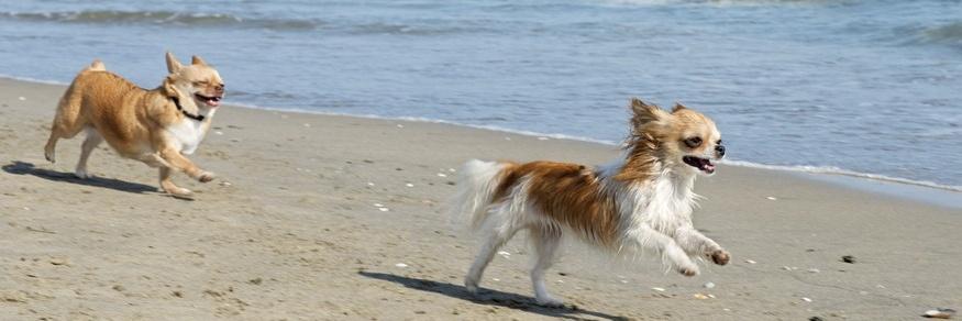 rickettsien hund heilbar